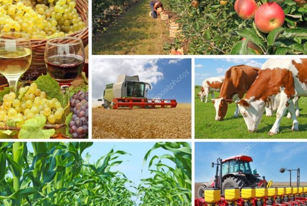 depositphotos_71037161-stock-photo-agriculture-collage